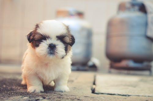 Pet Animals For Babies: Know Why You Should Buy One For Your Little Kid?