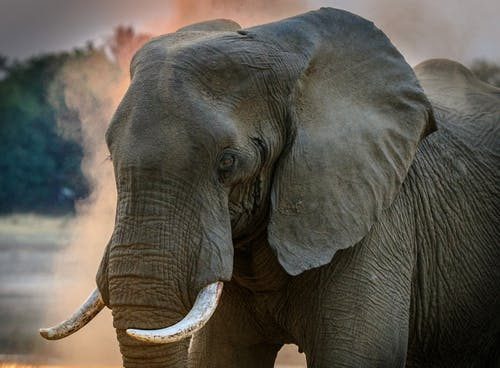 Are You Aware On The Fact That Which Animals Are Getting Endangered?