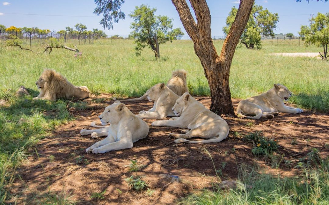 Great Ways to Conserve African Animal Species