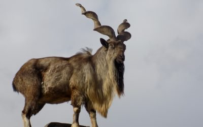 10 Most Unusual Animals on Earth