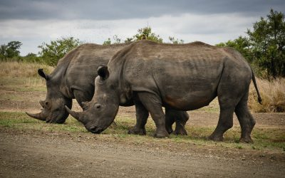 12 Ways To Protect The Endangered Species
