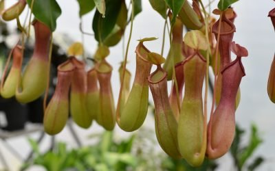 9 Catchy Most Strange-Looking Flowers in the World