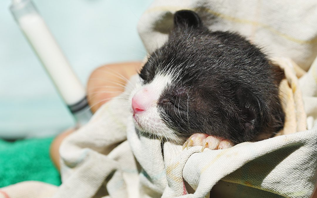 Protect Orphaned Animals – 5 Baby Animals to be Protected