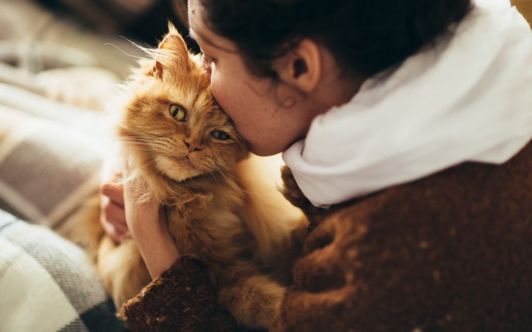 5 Tips On How To Get A Cat To Be A Service Animal To Cope-Up With Your Emotional Needs