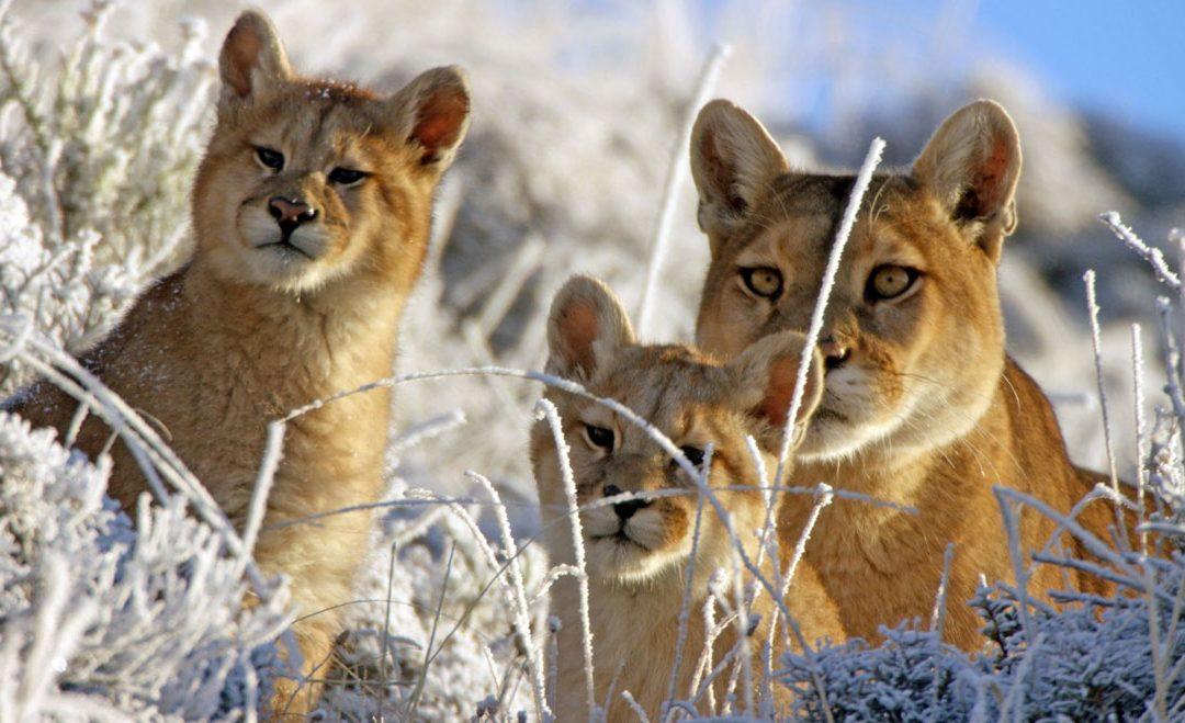 5 Astonishing Facts On Wildlife Sanctuaries Conservation- Famous Sanctuaries Around The World