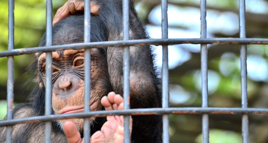 Are Zoos Good For Animals? Argument For And Against Zoos