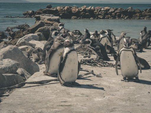 Facts On Wildlife Sanctuaries