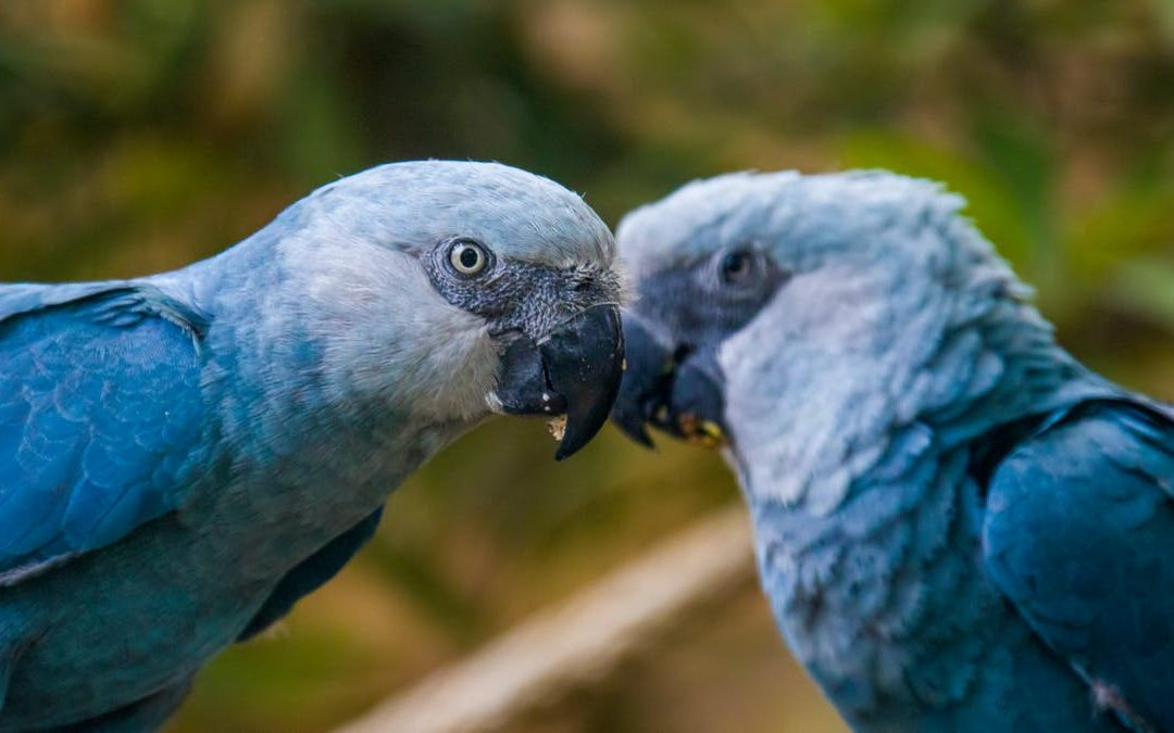 Some Beautiful Species Went Extinct In 2020